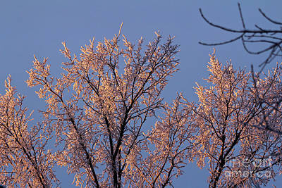 Photograph - Frosty Sunrise by Ann E Robson