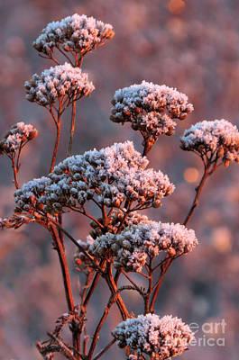 Photograph - Frosty Sunrise by Frank Townsley