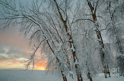 Photograph - Frosty Sunrise by Idaho Scenic Images Linda Lantzy