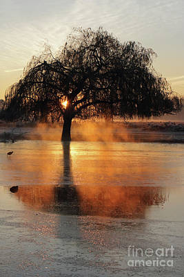 Frosty Sunrise In Bushy Park London 2 Art Print