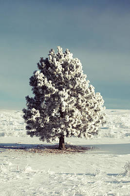 Photograph - Frosty The Tree by Todd Klassy