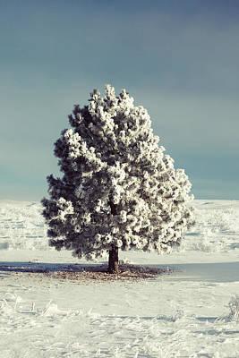 Pine Needles Photograph - Frosty The Tree by Todd Klassy