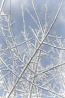 Photograph - Frosty Tree Branches by Jennie Marie Schell