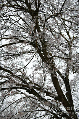 Snowy Roads Photograph - Frosty Tree Limbs by Carol Groenen