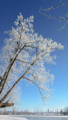 Photograph - Frosty Tree Over The Mississippi by Cheryl Baxter
