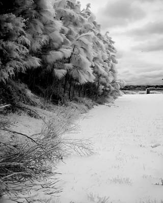 Photograph - Frosty Treeline by Hayden Hammond