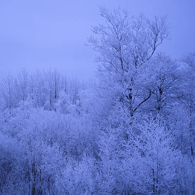 Photograph - Frosty Trees At Night by Ismo Raisanen