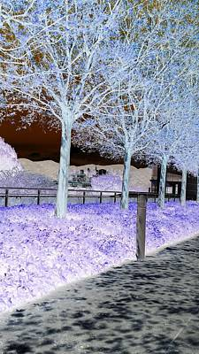 Photograph - Frosty Trees At The Getty by Karen J Shine
