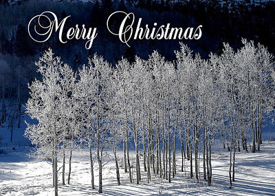 Photograph - Frosty Trees Christmas Card by Roy Kastning