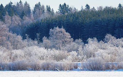 Photograph - Frosty Trees Of February by Ismo Raisanen