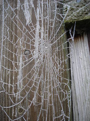 Frosty Web Art Print