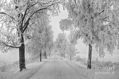 Landscape Natural Photograph - Frosty Winter Morning by Veikko Suikkanen
