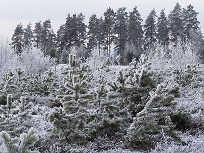 Photograph - Frosty Winter Treescape by Ismo Raisanen
