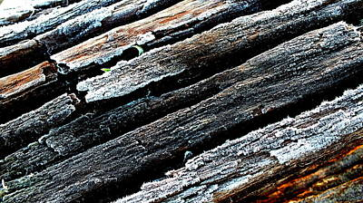 Photograph - Frosty Wood by Guy Pettingell