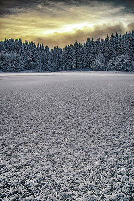 Photograph - Frozen 21.12.2017 by Plamen Petkov