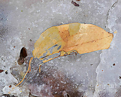 Photograph - Frozen And Broken Remnants Of Fall by Kathy M Krause