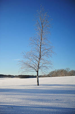 Photograph - Frozen Birch by Randi Grace Nilsberg