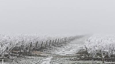 Photograph - Frozen Blueberry Mist by Bill Linn