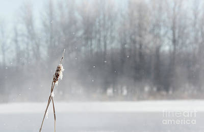 Photograph - Frozen Cattail Winter Scene by Cheryl Baxter