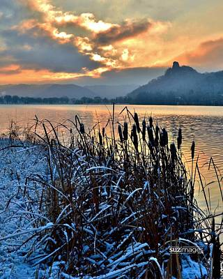 Photograph - Frozen Cattails by Susie Loechler