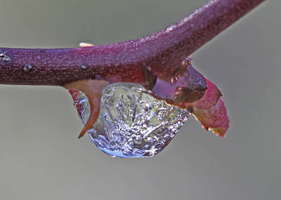 Ice Photograph - Frozen Drop Of Rain by Gary Wing