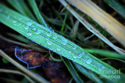 Photograph - Frozen Droplets by Kerri Farley