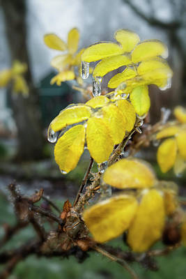 Photograph - Frozen Drops by Belinda Greb