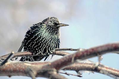 Frozen Feathers Art Print by Alan Look