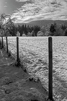 Photograph - Frozen Fields by Inge Riis McDonald