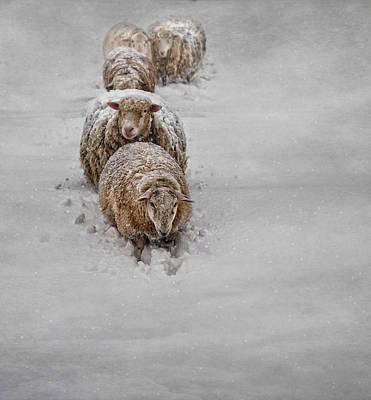 Sheep Photograph - Frozen Fleece by Robin-lee Vieira