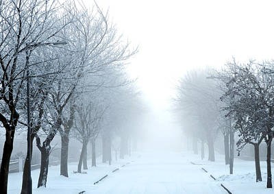 Wolf Digital Design Photograph - Frozen Fog by Svetlana Sewell