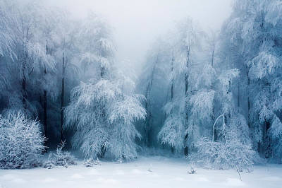 Central Balkan Photograph - Frozen Forest by Evgeni Dinev