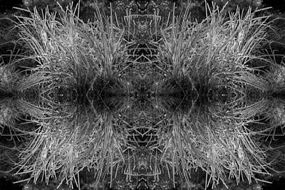 Photograph - Frozen Grass Abstract In Bw by Gary Cloud