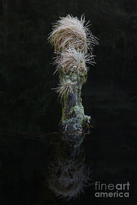 Outdoor Still Life Photograph - Frozen Grass On Tree Stump by Tony Higginson