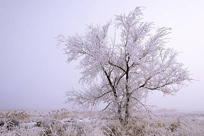 Ice Fog Photograph - Frozen Ground by Chad Dutson