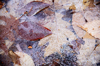 Photograph - Frozen Ice by Alana Ranney