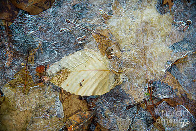 Photograph - Frozen In Ice  by Alana Ranney