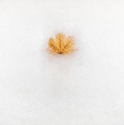 Maple Leafs Photograph - Frozen In Time by Scott Norris