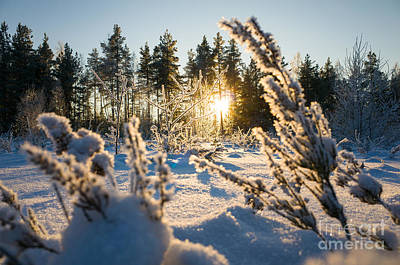 Photograph - Sunset In Frozen Forest by Ismo Raisanen
