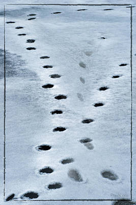 Photograph - Frozen Lake Animal Prints by Paul Vitko