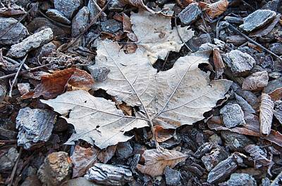 Photograph - Frozen Leaf And Pebbles by David Resnikoff