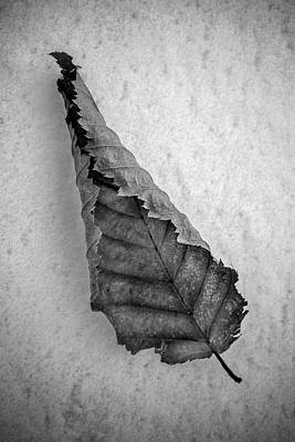 Photograph - Frozen Leaf. by David Hare