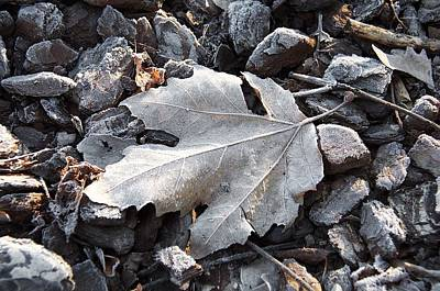 Photograph - Frozen Leaf by David Resnikoff