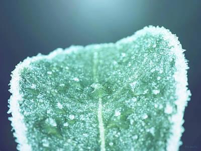 Photograph - Frozen Leaf by Wim Lanclus