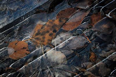 Frozen Leaves In Fall Art Print by Jonathan Hansen