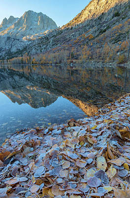 Photograph - Frozen Leaves by Jonathan Nguyen