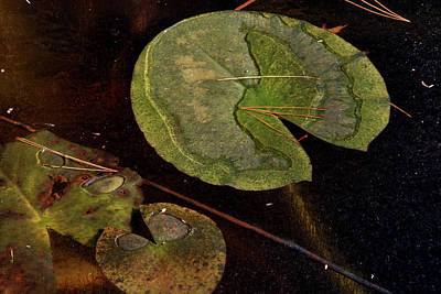 Photograph - Frozen Lily Pad by Christine Montague