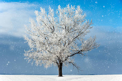 Photograph - Frozen Limbs by Todd Klassy