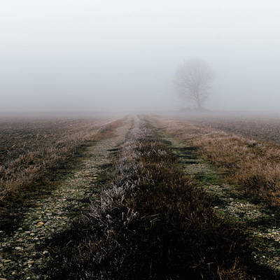 Photograph - Frozen Path In Foggy Landscape by Alexandre Rotenberg