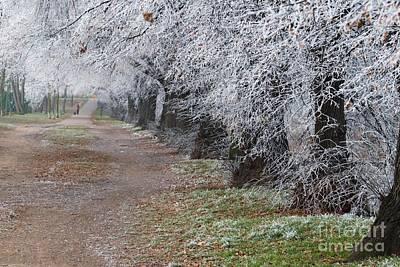 Photograph - Frozen Pathway by Katerina Vodrazkova